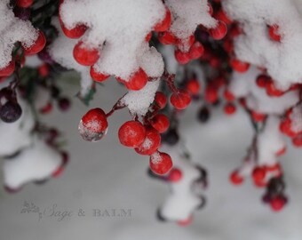 Nature photography, berries, Icy winter berries in the snow, frozen, abstract, red berries, romantic, Christmas,