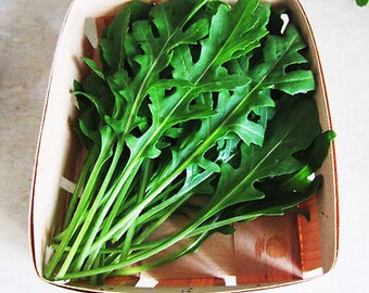 100 Rocket Salad Seeds Eruca sativa Arugula Rucola Organic Vegetables  TG1