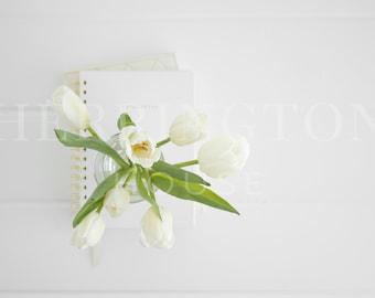 White floral stock photography | Tulips stock photo - Business stock photo - Flower stock photo - White stock photo - Minimalist stock image