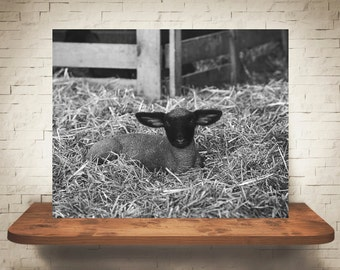 Lamb Photograph - Black White Photo - Fine Art Print - Wall Decor - Pictures of Lambs - Wall Art - Farmhouse Decor - Gifts