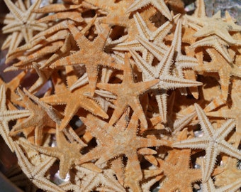 500 Bulk Tiny Starfish for Craft, Wholesale Starfish, Flat Starfish, Brown Starfish, Craft