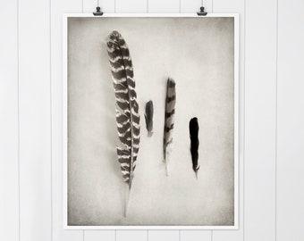 Feather art, Rustic Farmhouse decor, nature print, bird feathers, rustic farmhouse art, feather print, feather art print, wall art decor