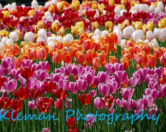 Tulip Bed Magnet-READY TO SHIP