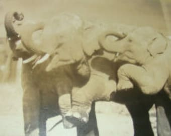 LAST CHANCE SALE rppc of 3 Elephants and Their Trainer