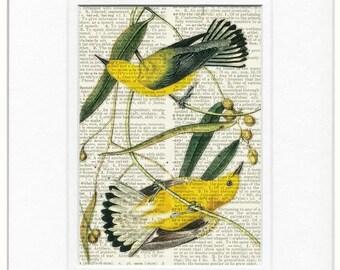 birds, Warbler print