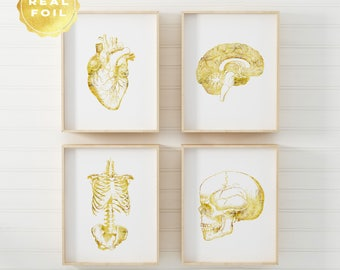 Anatomy Art Print Set - Medical Student Gift - Anatomy Decor - Gold Foil - Medical Art - Medical Office Decor - Graduation Gift