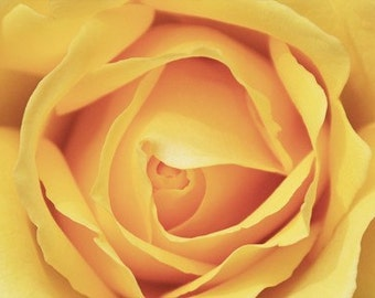 Yellow Rose - 5x7 Photography Note Card