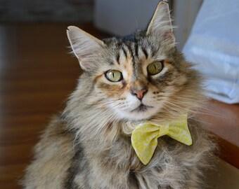 Lemon Drop Cat Bow Tie