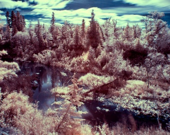Infrared, forest, stream, landscape, photography, wall art, winter, autumn, nature