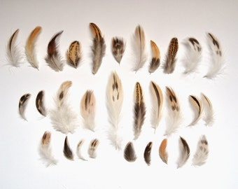 Cruelty Free Brown White + Black Assorted Natural Duck Feathers - Great for Crafts, Jewellery, Scrapbooking + Dreamcatchers - Ethical