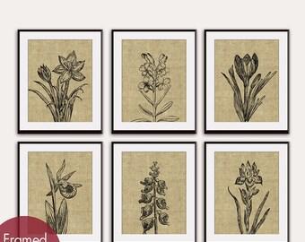 Wild Flowers (Series C6) Set of 6 - Art Prints (Featured in Coffee Burlap) Botanical Flower Art Prints