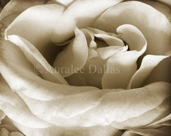 Sepia Rose Fine Art Photograph Warm Brown and Creamy White Wall Decor