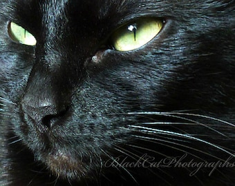 Black cat photo, pet portrait, ebony fur, lime green and pale yellow eyes, animal photograph, 5x7 macro print, feline fine art photography