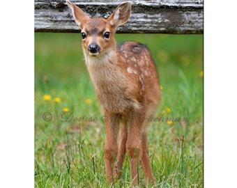 Spotted Baby Deer Photos - Brown White Fawn Nursery Art - Baby Animal Photos Baby Deer - Kid's Room Art Wildlife Photos - Baby Animal Print