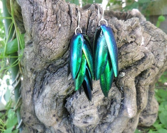 The Mermaid's Tail - Egyptian Beetle Wings
