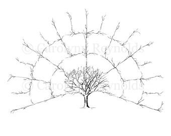 Ancestor & Genealogy Family Tree Fan Chart 4 Generations