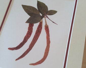 Kitchen Decor- Dried Red Hot Pepper Print