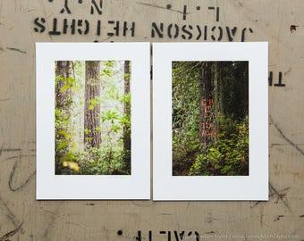 tree trunk, forest, northwest, redwood, douglas fir, art, photography, nature, california, Humboldt