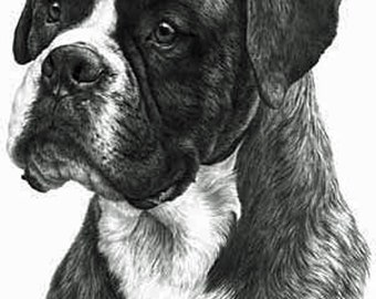 Boxer, Fine Art Print by Mike Sibley