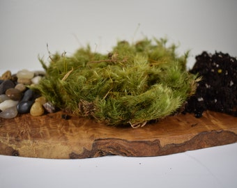 Moss Terrarium - DIY Kit