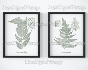 Digital print, Printable set, Fern print download, Fern art, Vintage botanical prints, Set of 2, Antique illustration, 8x10, 11x14, A3, JPG