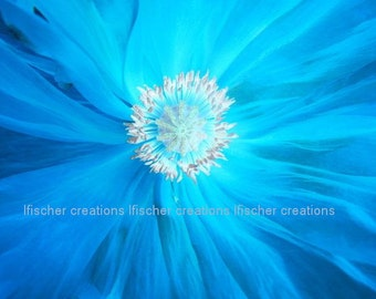 Blue Poppy Macro Digital Download Wall Art Home Decor Fine Art Photography