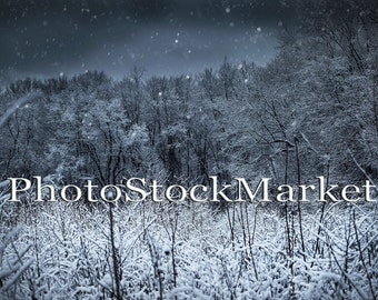 Snowy Night - Wooded Snow Scene - Night Snow Background -  Photoshop Backdrop - Winter night  - Photography Background - Snow landscape