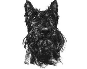 Scottie dog Drawing - fine art dog print - scottie gift
