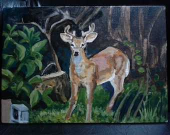 White Tail Deer Mini Paintings 5x7 Inches Snapshots Series Landscape CT Gifts Home Decor