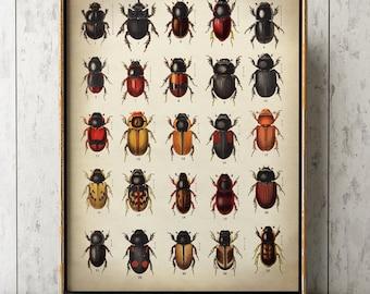 BEETLES POSTER, Beetles Print, Beetles Chart, Insect Poster, Entomology Print, Natural History Room Decor, Wall Art, Wall Decor