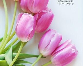 Pink Tulip Photography, Botanical Print, Fine Art Photography, Pink Flower print, nature photography, canvas wrap or print, 8x10 11x14 20x30