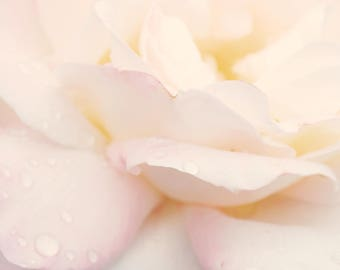 Spring Florals, Petal Pink, Fuschia Floral, Home Decor, Floral Photography, Dew Drop