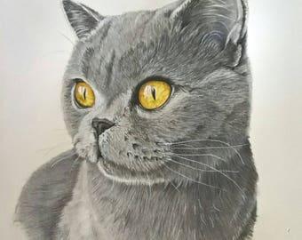 Custom cat pet portrait, pet painting, cat portrait. Commissioned cat portrait
