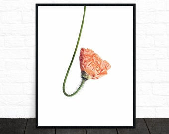 Flower Print, Botanical Art, Flower Photography, Poppy Print, Flower Poster, Botanical Photo, Flower Wall Art, Poppy Red, Digital Download