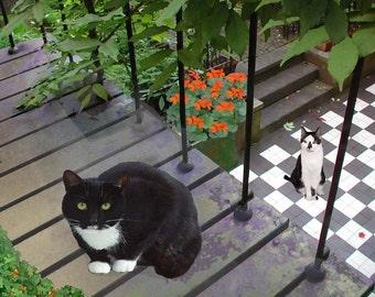 Tuxedo Cat, Blank Note Cards, Set of 5, Photo Notecards, Note Card Set, Note Card Stationery, Deborah Julian