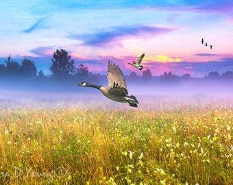 Canada Geese Flying, Bird Wall Art, Wildlife Art Print, Misty Field at Sunset, Field of Wildflowers, OOAK Gift Ideas, Fine Art Photography