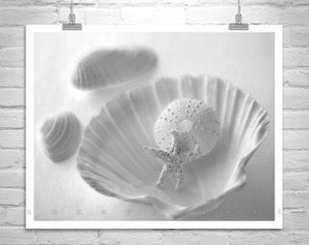 Black and White Bathroom Decor, Picture for Bathroom, Seashell Art, Starfish Art, Sea Urchin Art, Star Fish Decor, Sea Shell Photograph