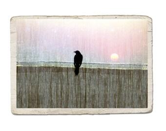 Bird Photograph Sittin' On The Fence Of The Bay Crow Raven Silhouette Sunset Sunrise Beach Pastel Nature