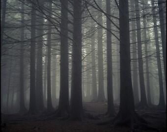 Norway Print, Dark, Misty Forest, Photography Art Print, Limited Edition, Analog, Landscape, Large Art, Trees, Foggy, Scandinavia, Nature
