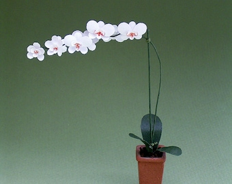 Moth Orchid Kit  for 1/12th scale Dollhouses, Florists and Miniature Gardens