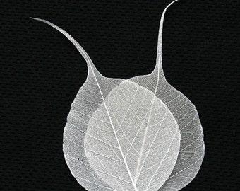 Ivory bodhi skeleton leaves