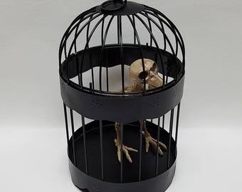 Halloween Decor Black Birdcage with Skeleton Bird