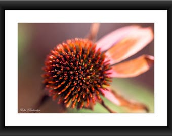 Fine Art Print of a Pink Flower, Macro Photography, Petal, Floral Photography, Floral, Botanic, Close-up, Blush, Photograph