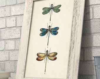 Dragonflies - 11x14 Unframed Art Print - Great Gift for Home Decor