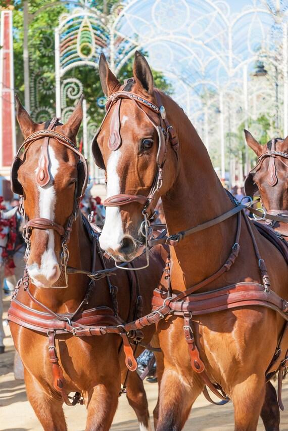 Jerez Horse Festival, horses, equine art, photographic print, limited edition print, Spain.