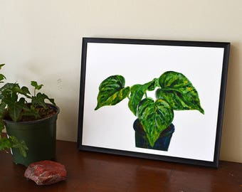 House Plant Art Print - Pothos, Epipremnum aureum, Money Plant, Devils Ivy, Philodendron - 8x10 Green Wall Art Home Decor