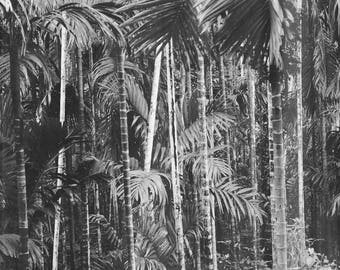 Black and White Palm Tree Art, Vintage Palm Tree Print, Palm Tree Photography, Black and White Vintage Palm Tree Wall Art