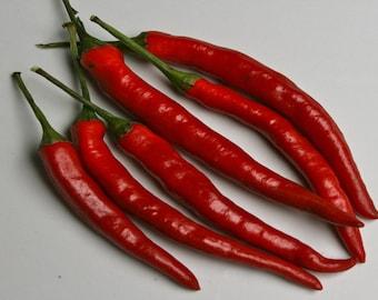 Long Thin Cayenne Pepper Seeds, Heirloom, Hot, Garden Favorite, 10 Seeds