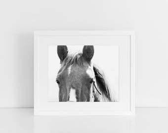Black White Horse Print, Equine Photography, Physical Horse Print