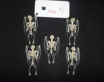 Taxidermy Fruit Bat Splaea Skeleton 5 Pcs